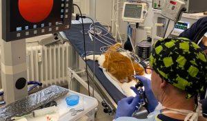 Tierarztpraxis Dr. Sörensen GmbH in Berlin - Endoskopie