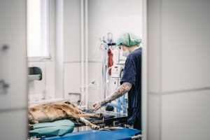 Tierarztpraxis Dr. Sörensen in Berlin - Narkose