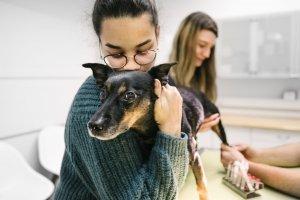 Tierarztpraxis Dr. Sörensen GmbH Berlin - Wir für Ihr Tier