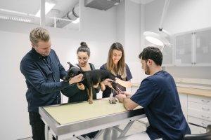 Tierarztpraxis Dr. Sörensen GmbH - Allgemeine Sprechstunde