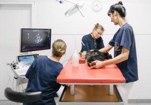 Tierarztpraxis Dr. Sörensen GmbH in Berlin - Kardiologie