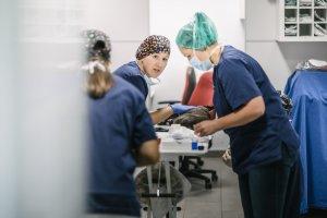 Tierarztpraxis Dr. Sörensen GmbH - Notfall