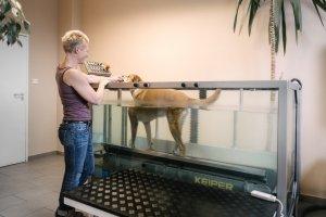 Tierarztpraxis Dr. Sörensen GmbH in Berlin - Physiotherapie